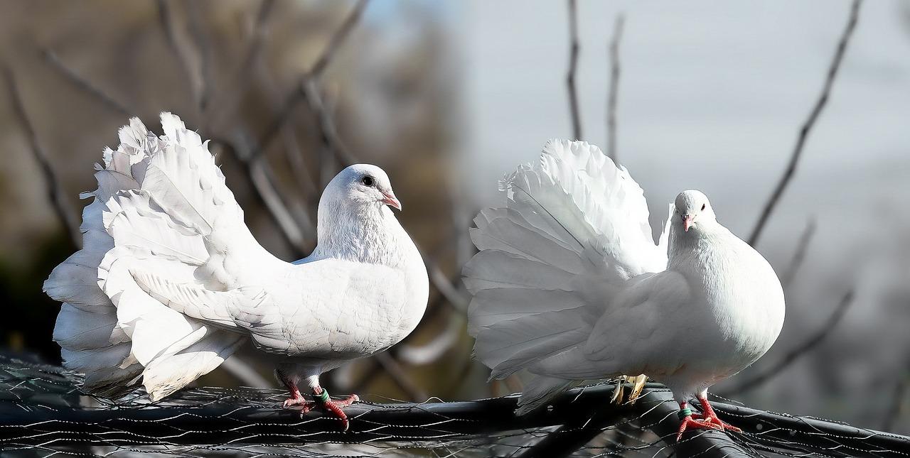 Il problema dei piccioni nelle città