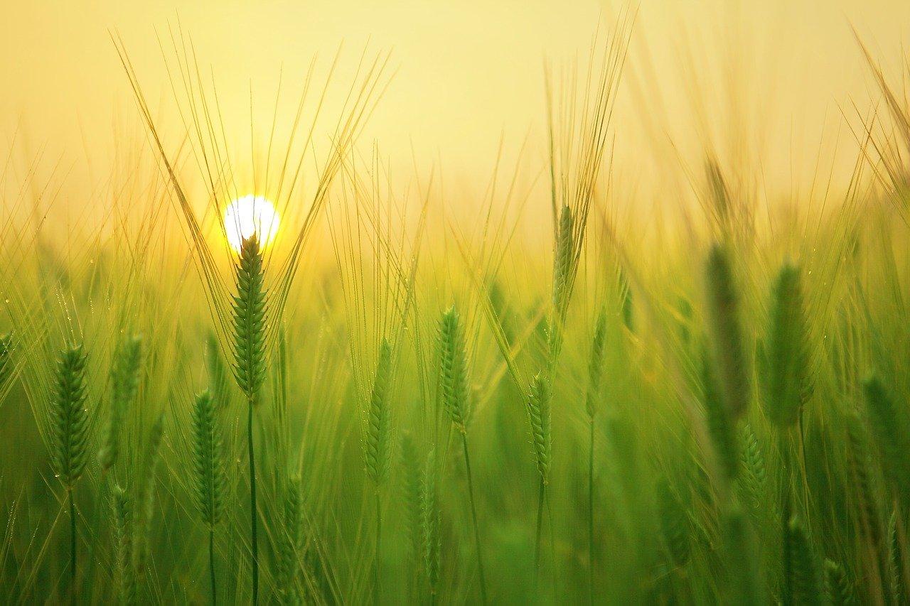 Controllo automatizzato dell'agricoltura